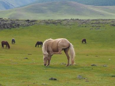 Randonnée en Mongolie